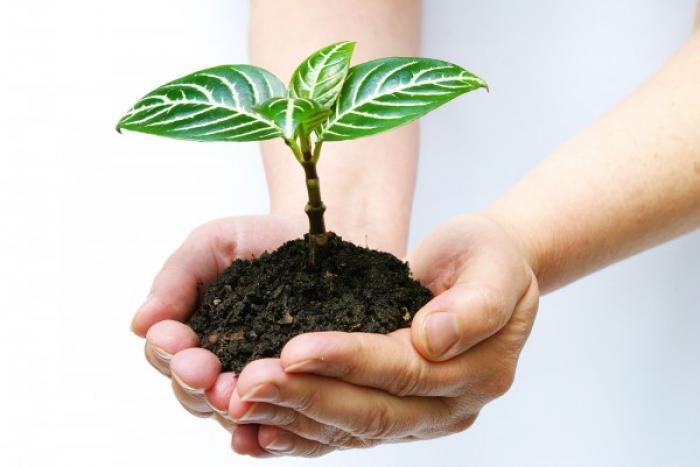 Mơ thấy trồng cây điềm báo như thế nào? Nên đánh lô đề gì?   1921745451