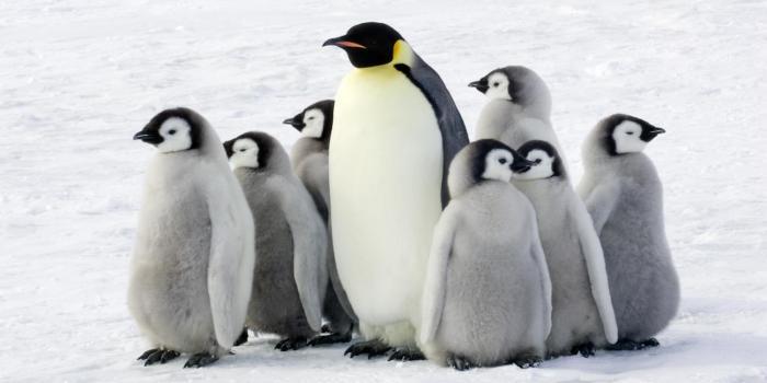 Mơ thấy chim cánh cụt mang điềm báo gì? Nên đánh con gì? 437971460