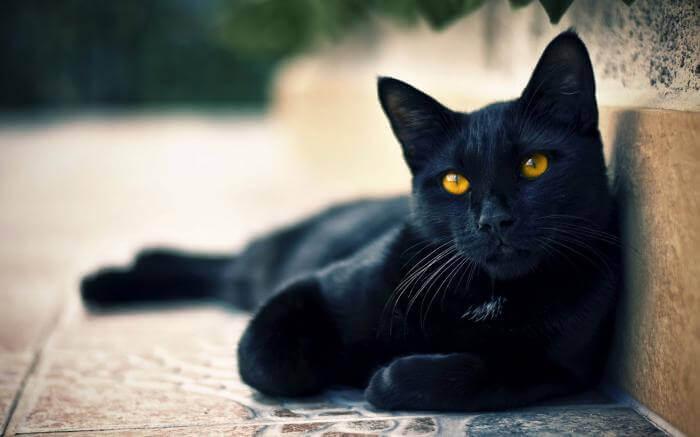 Mơ thấy mèo có điềm gì và mơ thấy mèo đánh số gì siêu chuẩn xác 717135018