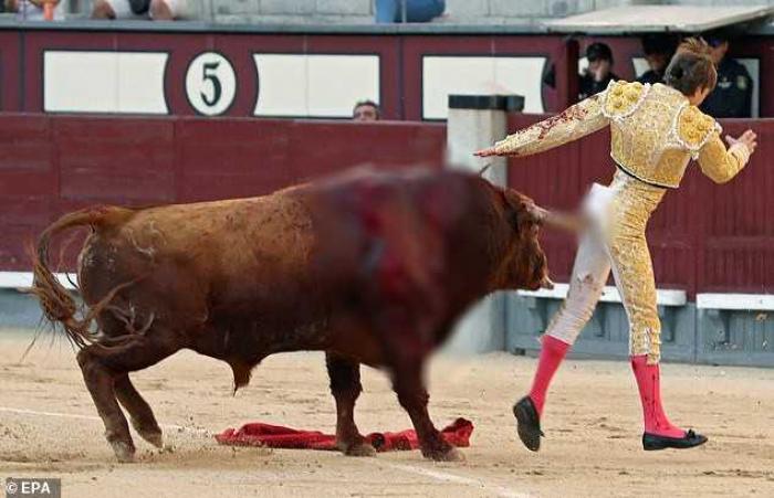 Mơ thấy bò húc người mang lại điềm báo và con số nào? 1424596221