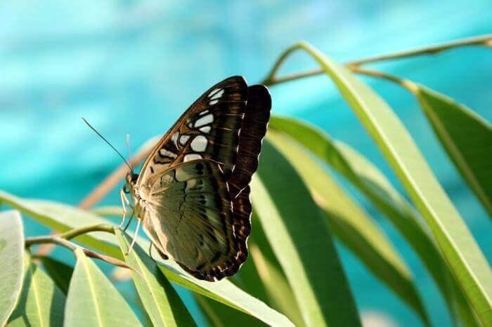 Giải mã giấc mơ thấy bướm và ý nghĩa giấc mơ thấy bướm 204843342