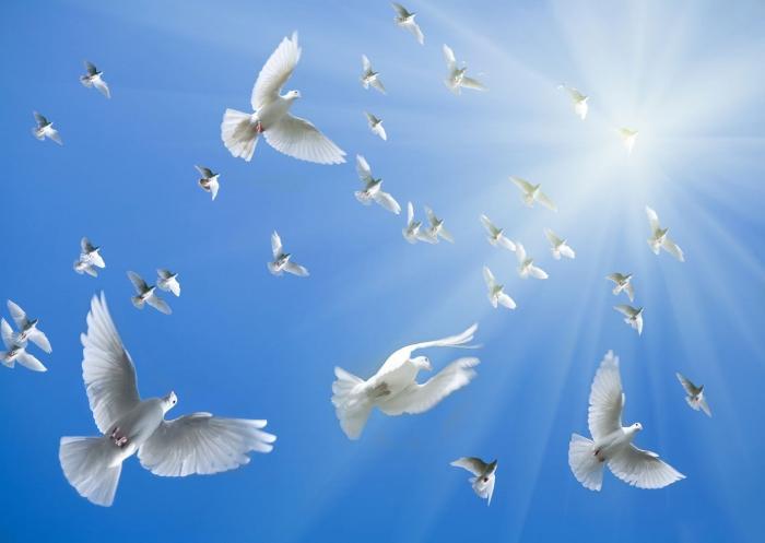 Giấc mơ thấy chim bồ câu ẩn chứa điều gì? Đâu là con số tài lộc? 77512335
