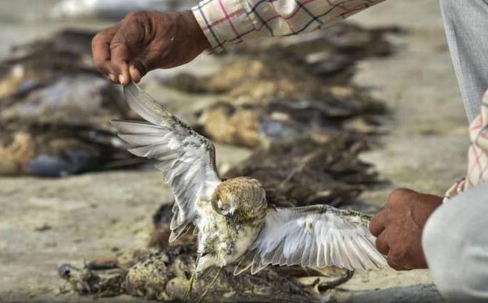 Nằm mơ thấy chim chết đánh con gì trúng lớn? 1581591868