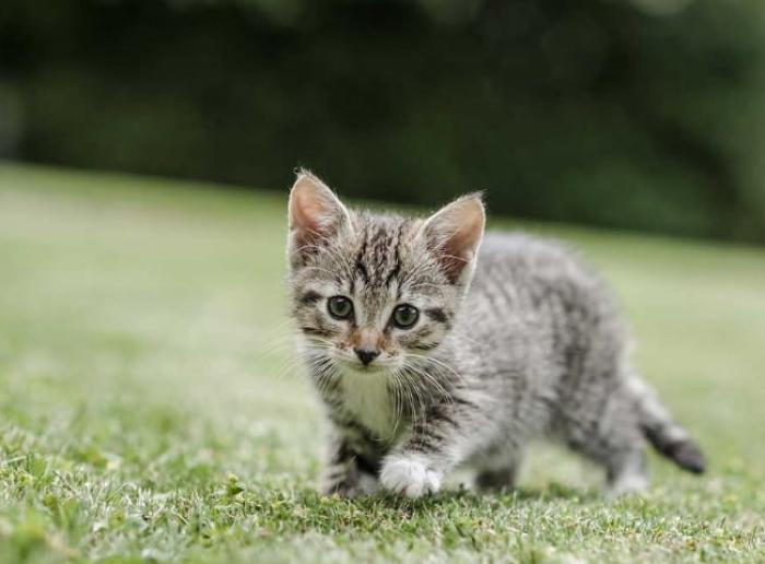 Giải mã giấc mơ thấy mèo con là điềm báo gì?  1418657328