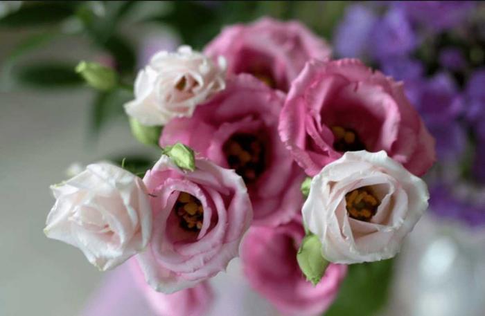 Tìm hiểu ý nghĩa phong thủy của hoa Cát Tường 1244114913