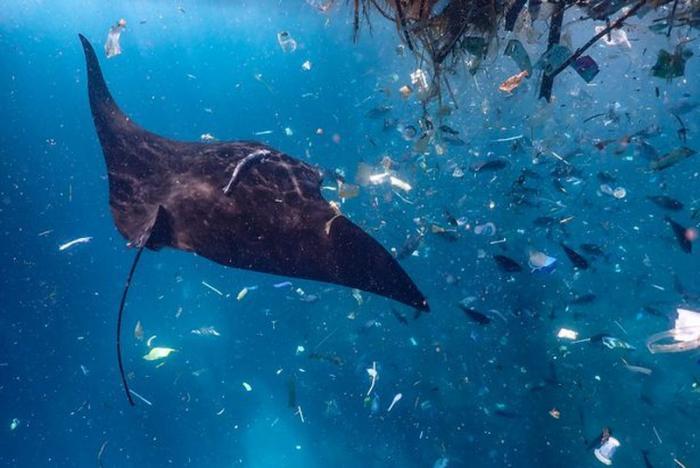 Đánh con số nào trúng lớn khi mơ thấy cá đuối? 1352833167