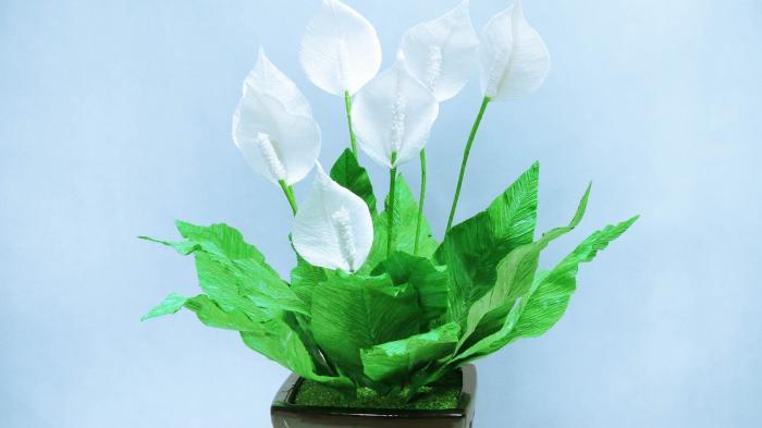 Nằm mơ thấy hoa lan Ý đánh con gì trúng lớn? 1021203298