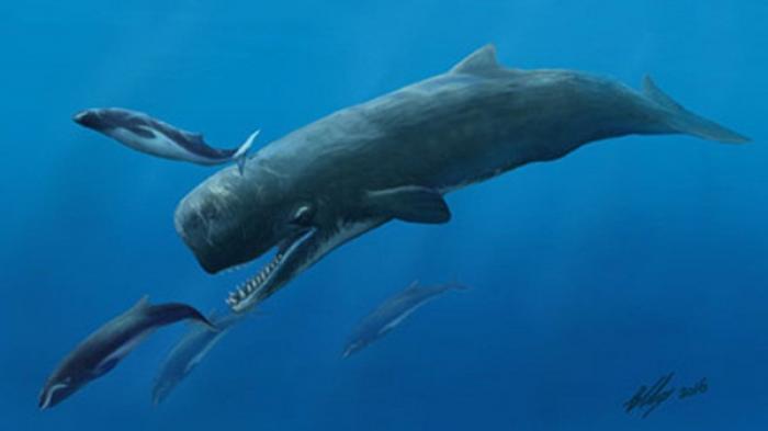 Nằm mơ thấy cá nhà táng là điềm báo lành hay dữ? 1103038453