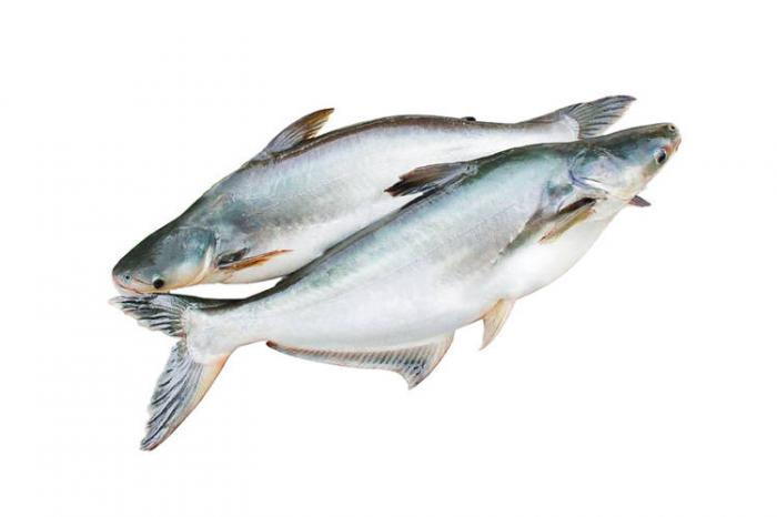 Đánh con gì may mắn khi mơ thấy cá basa? 1261004891