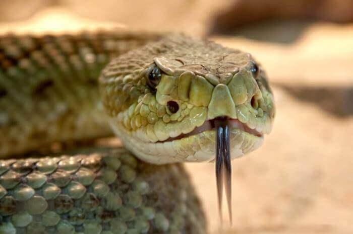 Giải mã giấc mơ thấy rắn chính xác nhất 503292079