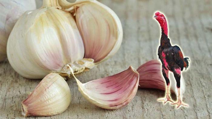 Khám phá top 10 loại thức ăn cho gà khỏe mạnh 629908322