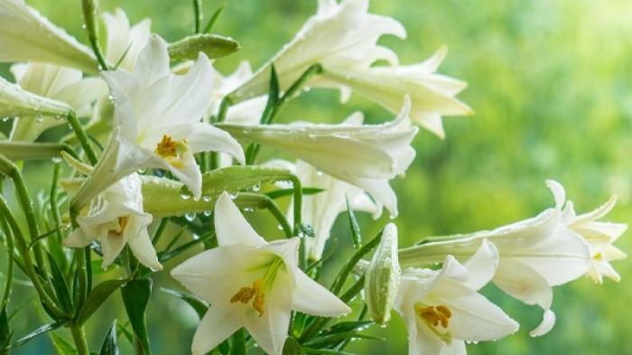 Giải mã mơ thấy hoa huệ đánh con gì hiệu quả cao?  1458704225