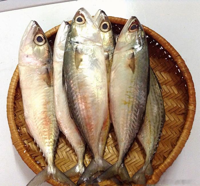 Mơ thấy cá bạc má nên đánh con số nào để trúng lớn?  1318276316