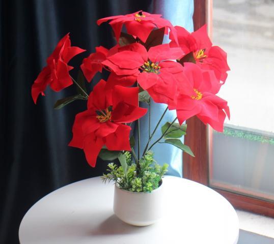 Ý nghĩa phong thủy cây hoa trạng nguyên 86437098