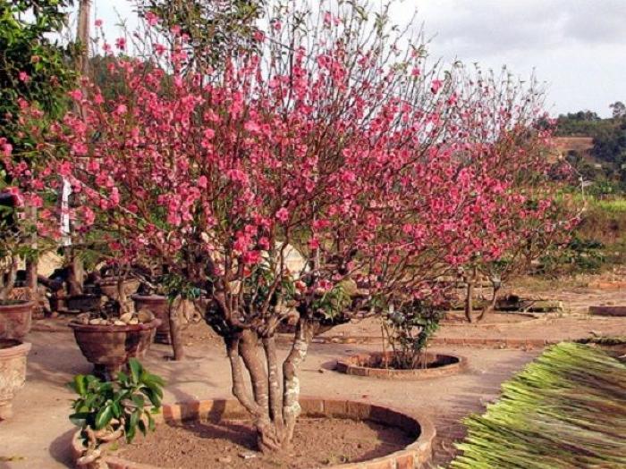 Bật mí cho bạn 9 loại cây có gai trừ tà 1475501187