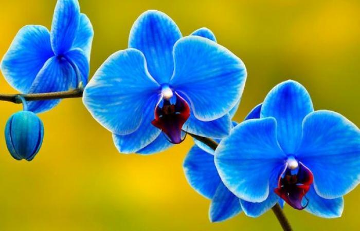 Mơ thấy hoa lan đánh con gì ăn chắc nhất? 473990709
