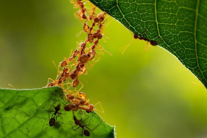 Giải mã giấc mơ thấy con kiến mang điềm báo gì? Nên đánh con gì? 1214469771