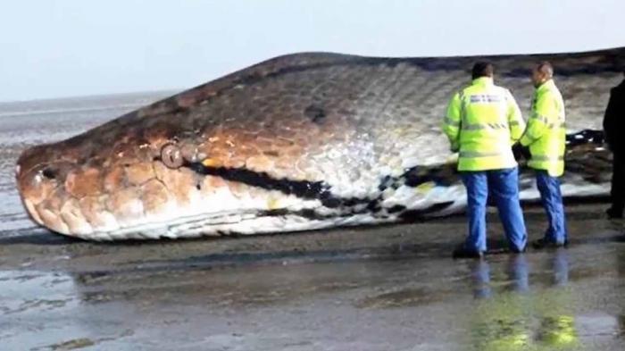 Đánh con gì trúng lớn với giấc mơ thấy rắn khổng lồ?  282605557