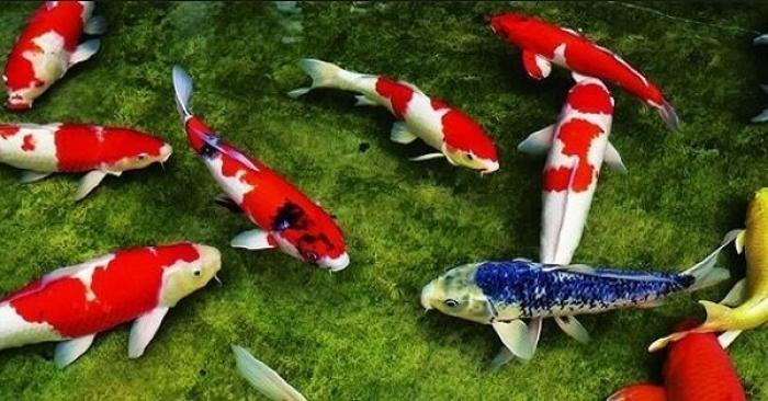 Nằm mơ thấy nhiều cá ẩn chứa điều gì? Đánh con gì trúng lớn? 1237615671