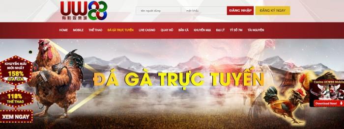 Tổng hợp 10 trang mạng đá gà online chất lượng nhất  129630425