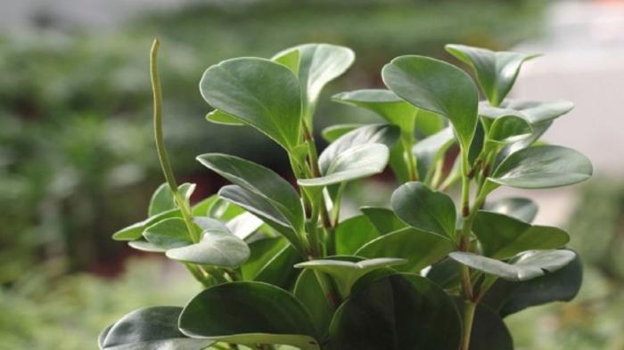 Tổng hợp 11 loại cây phong thủy mang nhiều ý nghĩa may mắn và thu hút tài lộc 1887897138