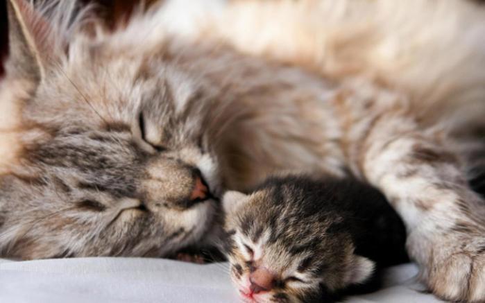 Giải đáp ý nghĩa của nhau mèo  1541853525