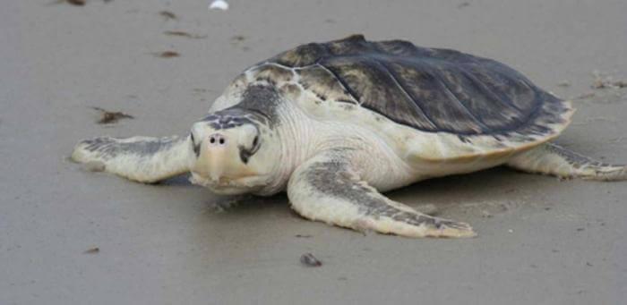 Ngủ mơ thấy con rùa có nghĩa gì/điềm gì và đánh số gì chuẩn xác 1094837016