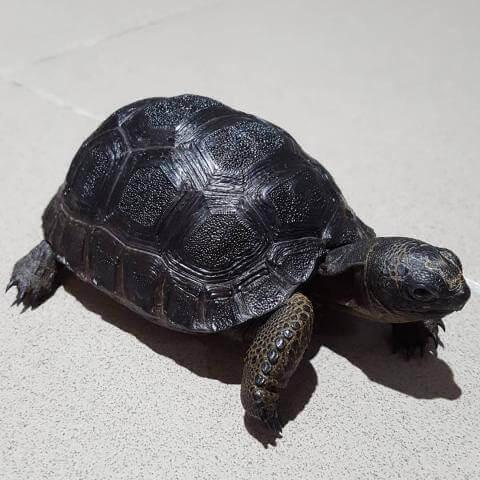 Ngủ mơ thấy con rùa có nghĩa gì/điềm gì và đánh số gì chuẩn xác 1177507989