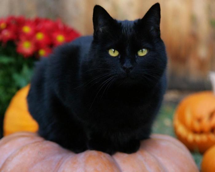 Giải mã giấc mơ thấy mèo đen đánh số mấy trúng lớn? 2076873235