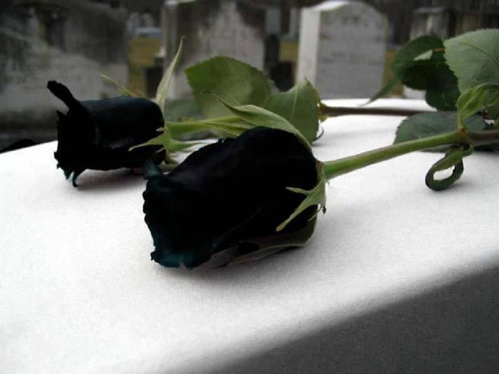 Ý nghĩa hoa hồng đen trong truyền thuyết 1986983658