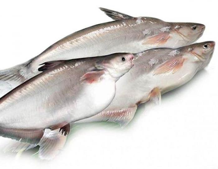 Mơ thấy cá hú có ý nghĩa gì? Đó là điềm lành hay dữ? 1691639587