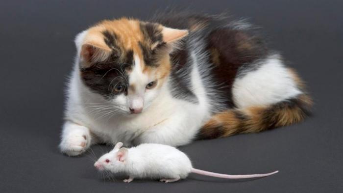 Mơ thấy giết chuột: Giải mã giấc mơ và những con số có liên quan 1589231281