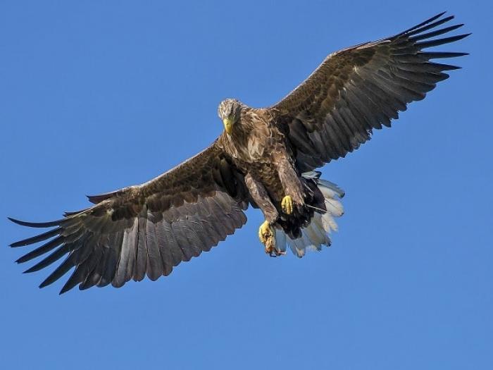 Mơ thấy chim đại bàng đánh con gì? Điềm báo như thế nào?  2117675921