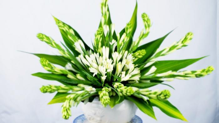 Hướng dẫn cách cắm hoa huệ để bàn thờ đón nhiều may mắn và tài lộc 447147857