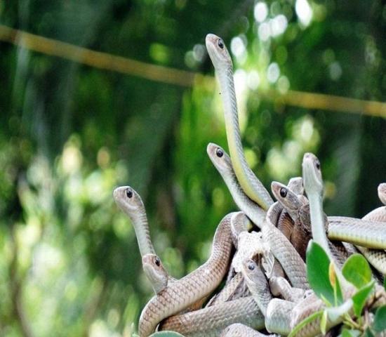 Giấc mơ thấy nhiều rắn đánh con gì trúng lớn? 1430676601
