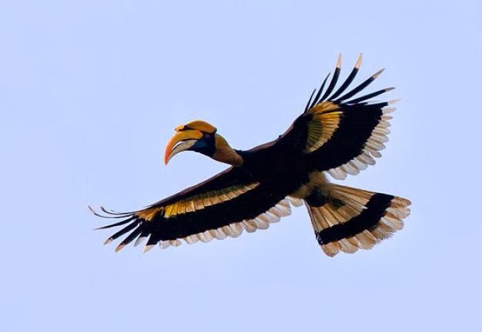 Nằm mơ thấy chim Hồng Hoàng nên đánh lô đề con gì? 359946131