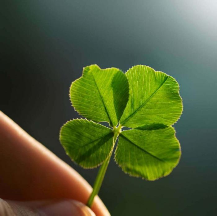 Tìm hiểu ý nghĩa cỏ 4 lá trong phong thủy và cuộc sống 1089189218