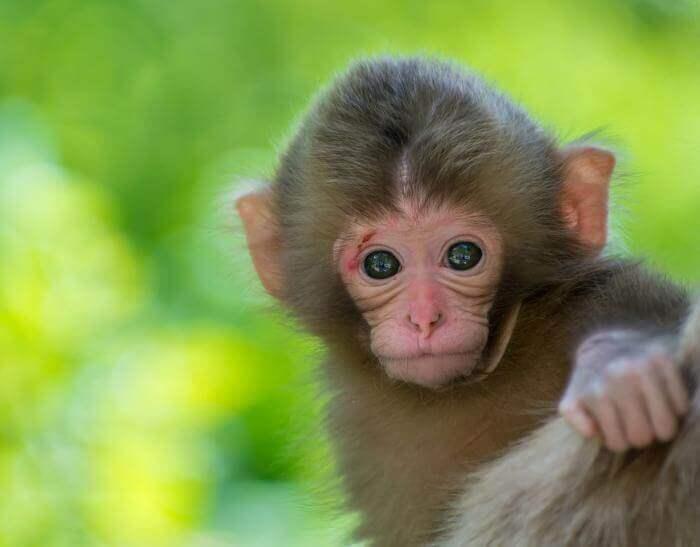 Mơ thấy khỉ có điềm gì và nên đánh số con gì dễ trúng đây anh em? 407737138