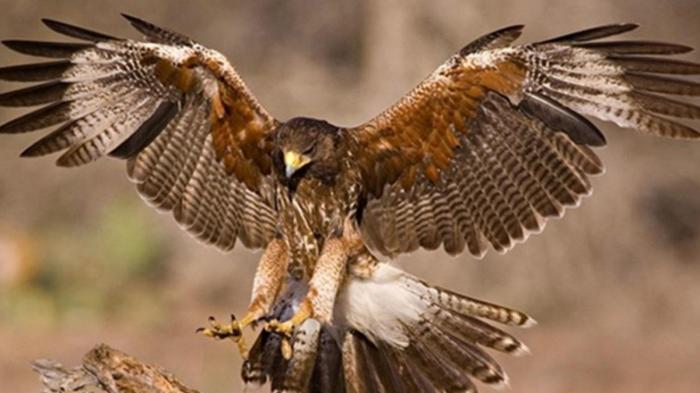 Mơ thấy chim cắt mang điềm báo gì? Nên đánh con gì? 1113095162