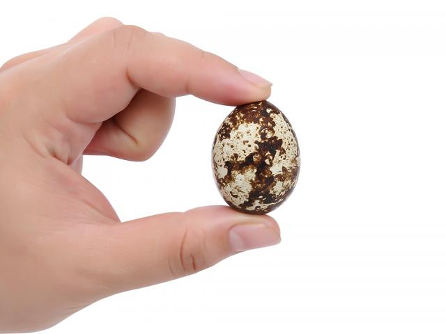 Giải mã giấc mơ thấy trứng cút nên đánh lô đề số nào? 1508216037