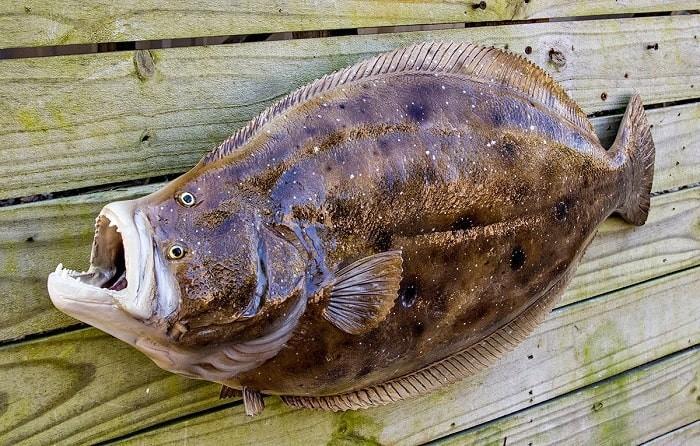 Nằm mơ thấy cá bơn đánh con gì dễ trúng lô đề nhất? 1314968843
