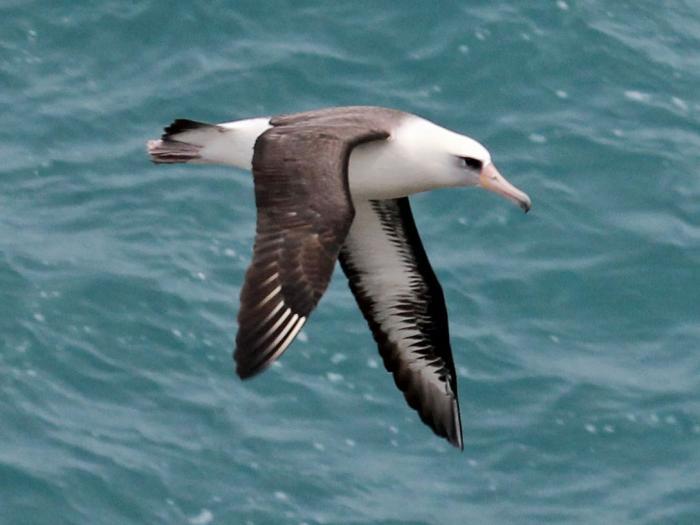 Nằm mơ thấy chim hải âu mang đến điềm báo gì? 1070583912