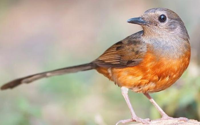 Mơ thấy chim chích có ý nghĩa gì? Nên đánh con gì may mắn? 510671394