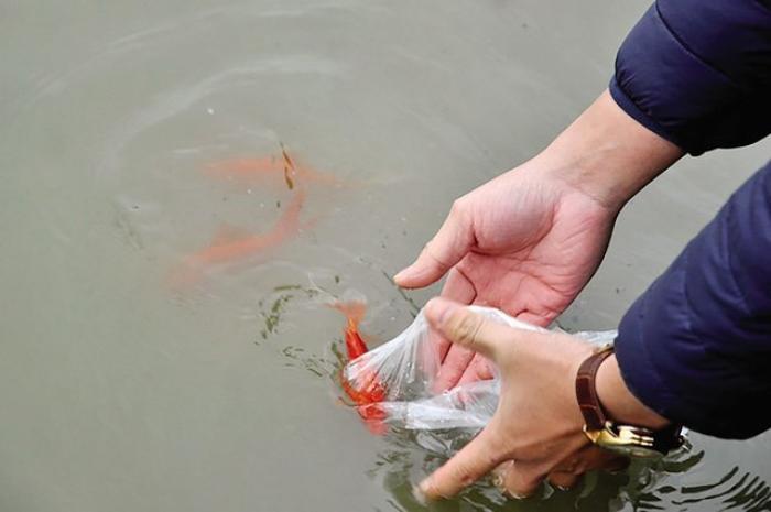 Giấc mơ thấy phóng sinh cá có ý nghĩa gì? Đánh con nào may mắn? 1892430333