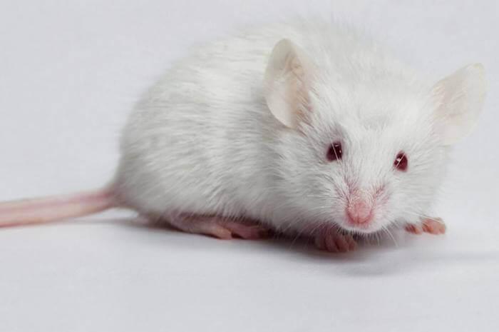 Mơ thấy con chuột đánh số gì và có ý nghĩa gì? 912077231