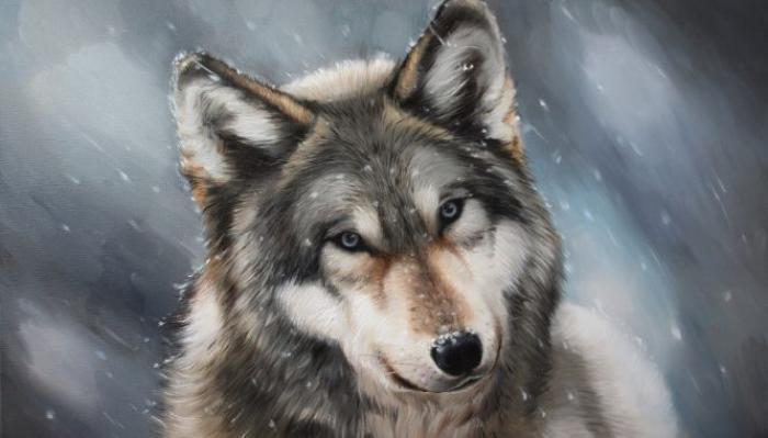 Mơ thấy sói đánh đề số mấy? Điềm báo gì? 1879168676