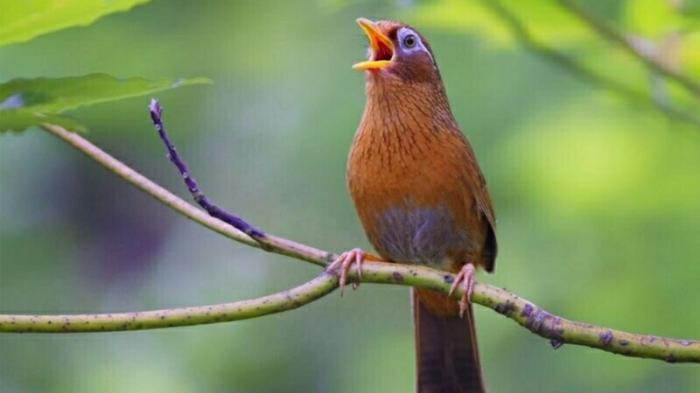 Nằm mơ thấy đàn chim bay đánh con gì? 247960365