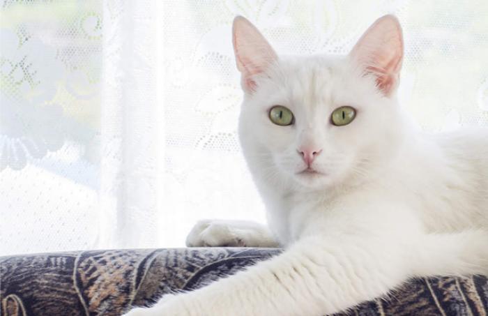Giải mã giấc mơ thấy mèo trắng và những điềm báo có liên quan 1690126735
