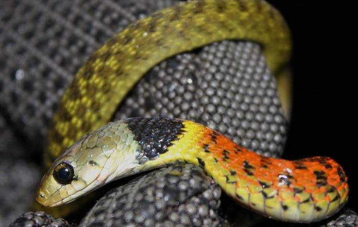 Mơ thấy rắn bị chặt đầu đánh con gì trúng lớn? 2096187142