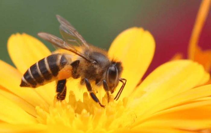 Nằm mơ thấy ong đánh con gì? Đây là điềm báo lành hay dữ? 1380440927
